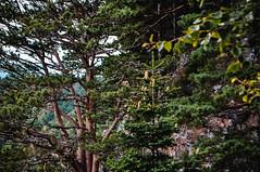 DSC_0080 (Hilðr) Tags: mountains trees rocks forest woods view horizon canyon hills pine stones moss norse inspiration spirit hiking dark