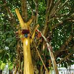 Golden branch in cemetary.  San Kamphaeng, Thailand thumbnail