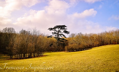 Under the Clouds (Francesco Impellizzeri) Tags: brighton england trees canon landscape clouds
