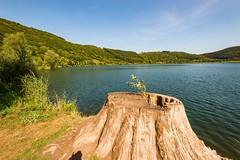 Am Meerfelder Maar (clemensgilles) Tags: unlimitedphotos rheinlandpfalz deutschland beautiful trees hiking sommer summer vulkaneifel maar lake eifel germany