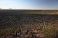 garden of eden (1600 Squirrels) Tags: 1600squirrels photo 5dii lenstagged canon24105f4 polarizer tripod landscape saguaro cactus tucsonmountaindistrict saguaronationalpark tucson arizona usa