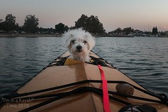"Wet! (Lisa Ouellette) Tags: lakenatoma kayak dog ""firsttime"" rescue maltese"