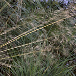 wind and grass thumbnail