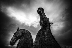 "horse heads rearing against the storm, fine art black & white of The majestic Kelpies towering over the Forth & Clyde Canal, Falkirk, Scotland, UK (grumpybaldprof) Tags: bw blackwhite ""blackwhite"" ""blackandwhite"" noireetblanc monochrome ""fineart"" ethereal striking artistic interpretation impressionist stylistic style contrast shadow bright dark black white illuminated moody storm clouds mood atmosphere atmospheric ""thekelpies"" horsehead sculpture forth clyde canal ""rivercarron"" ""thehelix"" scotland uk ""andyscott"" statues 2013 ""forthclydecanal"" ""riverforth"" steel ""stainlesssteel"" ""30mtall"" ""300tonnes"" art artist mythology ""heavyhorse"" canon 7d ""canon7d"" sigma 1020 1020mm f456 ""sigma1020mmf456dchsm"" ""wideangle"" ultrawide"