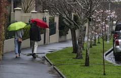 Springtime (Ian@NZFlickr) Tags: spring springtime love blossom rain auckland nz