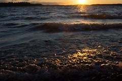 Golden sunset waves - Lake Päijänne (talaakso) Tags: finnishwilderness finnishlake finnishnature kelvenne naturelandscape päijänne päijännenationalpark päijänteenkansallispuisto terolaakso aallot beautyoffinland goldensunset goldenwaves järvi järvimaisema lakelandscape sjö sjölandskap sunset sunsetwaves talaakso waves padasjoki päijännetavastia finland fi nikond7200 d7200