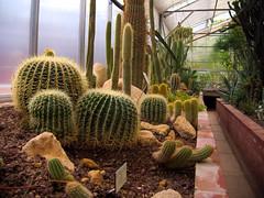 Jardin Botanique Metz (studio SW) Tags: jardin metz lorraine tropical plante cactus serre