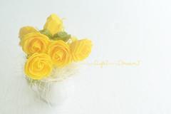 roses jaunes (Chocolatine photos) Tags: roses jaune yellow photo photographesamateursdumonde pdc makemesmile minimaliste flickr flickrelite fleurs nikon nature flowers nikoneurope