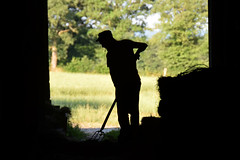 Les Ossons (à l'oeil de verre photographie) Tags: saint plantaire ferme paysans paysan confédaration paysanne indre rurale chevre mouton 36 région centre vache bétail tracteur champ