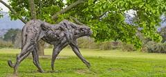 Bronze stillness (Coisroux) Tags: d5500 statues iron art nikond5500 gardens leopard westerncape