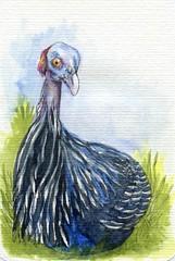 Postcards for the Lunch Bag - Guinea Fowl (Life Imitates Doodles) Tags: guineafowl bird postcardart postcardsforthelunchbag
