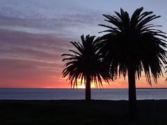Westshore sunrise (Home Land & Sea) Tags: nz newzealand hawkesbay napier westshore beach sunrise palmtrees silhouette sky sonycybershot dschx100v pointshoot homelandsea