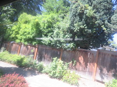 IMG_8318 (Andy E. Nystrom) Tags: bellevue washington wa bellevuewashington