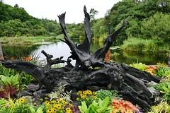 Mooreiche (Cong, Ireland) (moraal23) Tags: moor bog eiche oak irland ireland cong
