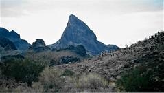 Arizona...Late Afternoon (Shot by Newman) Tags: thesouthwest mojavedesert cacti brush desertscape rockformations shotbynewman mountains fuji400 daylight view walk fujifilm 35mm nature 35mmminolta