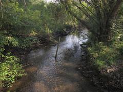"""My propertyline runs through Honey Creek! Don't you wade onto my land! I hate you! The creek is mine!"" (Tim Kiser) Tags: 2015 20150907 annarbormetropolitanarea clayeyhighlimetillplains easterncornbeltplains honeycreek honeycreeklandscape huronriverdrainagebasin huronriverwatershed img3834 lakeeriedrainagebasin lakeeriewatershed michigan michiganlandscape sciotownship sciotownshipmichigan sciotownshiplandscape september september2015 washtenawcounty washtenawcountymichigan washtenawcountylandscape barbedwire boundary boundaryfence creek creekfence creeklandscape fence fenceacrossacreek forest forestlandscape landscape propertyboundary propertyfence propertyline riparianarea riparianforest riparianplants riparianwoodland river riverlandscape riverinelandscape southeastmichigan southeastmichiganlandscape southeasternmichigan stream streamlandscape summer summerlandscape summerwoodland temperatedeciduousforest viewfromabridge wirefence wirefencing woodland woodlandlandscape woods"
