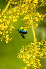 180819 Yakushiike Park-04.jpg (Bruce Batten) Tags: animals arthropods caprifoliaceae flowers honshu insects invertebrates japan machida parks plants reflections tokyo yakushiike