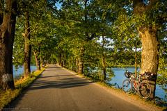 Damm-Allee (Torsten Frank) Tags: allee baum baumstamm bikepacking fahrrad jguillem laubbaum orient radrennen radsport rennrad tcrno6 technik teich transcontinentalrace tschechien wasser böhmen strase