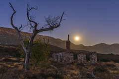 Ruins of the Buckman homestead along Old Highway 80 under a full moon (slworking2) Tags: pinevalley california unitedstates us buckman buckmansprings ruins decay homestead moon fullmoon tree chimney urbex