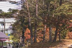 DSC_0296 (juor2) Tags: d750 nikon scene travel japan fukushima aizuwakamatsu lake pond maple autumn scenery volcano colorful