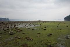 Penrose Point State Park, Washington State (Team Kweeper) Tags: coast lowtide ocean sea washingtonstate tidepools pugetsound pacificocean