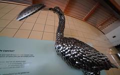 Spoonbill (2) (bertknot) Tags: blijdorp blijdorprotterdam blijdorpzoo dutchzoo dierentuin blijdorpdierentuin spoonbill lepelaar