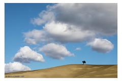 "Loneliness <a style=""margin-left:10px; font-size:0.8em;"" href=""http://www.flickr.com/photos/66444177@N04/43492942325/"" target=""_blank"">@flickr</a>"