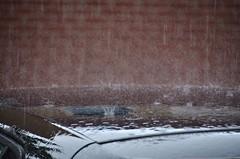 Regen (Hugo Sluimer) Tags: natuur nature natuurfotografie natuurfotograaf naturephotography natuurinbloei vlaardingen zuidholland nederland holland