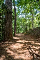 A Walk in the Woods (Jakesb_001.NEF) Tags: wood woods walk walking hike tree trees tall wild wildlife life green a nikon nikkor d7100 beautifull beautiful dirt trail roots