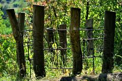 HFF! An Yurassic Park after the dinosaurs had become extinct. (seyf\ART) Tags: museum dorf zaun fence thüringen hff zenithelios44