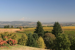 IMG_6609 (willsonworld) Tags: willamette valley wine tasting dan diane cat jose david dave grapes 2014