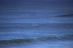IMG_3652 (gervo1865_2 - LJ Gervasoni) Tags: surfing with whales lady bay warrnambool victoria 2017 ocean sea water waves coast coastal marine wildlife sealife blue photographerljgervasoni