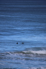 IMG_3635 (gervo1865_2 - LJ Gervasoni) Tags: surfing with whales lady bay warrnambool victoria 2017 ocean sea water waves coast coastal marine wildlife sealife blue photographerljgervasoni