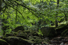 Vosges (Nicolas4065) Tags: vosges france europe paysage landscape wallpaper hd green roche rocher arbres trees montagne moutain summer été grandest lorraine tourisme outdoor extérieur canon eos digital nature natural travel world french
