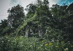 DSC_0045 (Hilðr) Tags: mountains trees rocks forest woods view horizon canyon hills pine stones moss norse inspiration spirit hiking dark