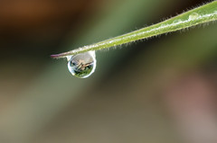The raindrop - HBW (Jo Evans1- trying to catch up - again!) Tags: bokeh wednesday raindrop grass hand held heavily cropped