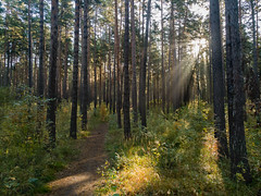 IMG_20180919_092314 (alexey.turkov) Tags: huaweip9 huawei forest autumn sun sunlight