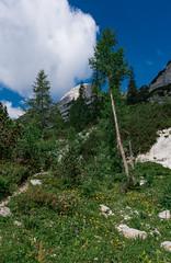 Trail from Velo polje to Dolič (happy.apple) Tags: starafužina radovljica slovenia si slovenija julijskealpe julianalps alps summer poletje landscape trail wildflowers