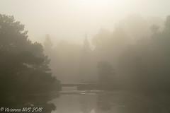 Bridge (SF knitter) Tags: chicagobotanicgarden cookcounty cookcountyforestpreserves illinois japanesegarden fog garden mist morning preserves