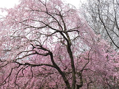 a (19) (hiromi89) Tags: japan beauty beautiful scenery flower wood pond