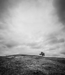 I think we're alone now (grbush) Tags: tree lonetree lonelytree alone desolate blackwhite bw monochrome hill countryside rural northamptonshire england clouds lonely olympusm918mm olympus m43 em10mark11