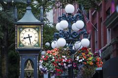 Visite du quartier historique de Gastown où se trouve la fameuse horloge à vapeur, à Vancouver (Voyages Lambert) Tags: singleflower gastown gastownsteamclock nopeople downtowndistrict locallandmark famousplace traveldestinations urbanscene outdoors horizontal vancouvercanada britishcolumbia canada flower city clock