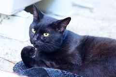 a cat (takapata) Tags: sony sel90m28g ilce7m2 neko cat 猫さん