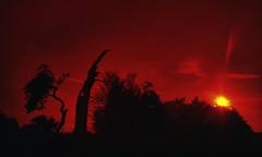 TREESHF_8196604 (3) (hlh 1960) Tags: trees bäume farben colours sun sunrise sonne sol soleil nature natur landschaft landscape mystic streuobstwiese summer sommer sunbean sonnenstrahlen red himmel sky