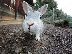 rabbit (marcomuccioli) Tags: rabbit coniglio gopro hero6 faccia face