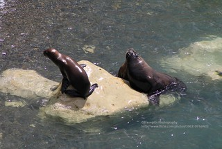 Puerto Madryn, Punta Loma, seals