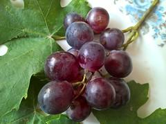 WP_20180902_15_29_57_Raw (vale 83) Tags: microsoft lumia 550 grapes