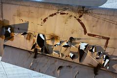 Sikorsky JRS-1, NASM (2) (Ian E. Abbott) Tags: sikorsky jrs1 flyingboat pearlharbor nationalairandspacemuseum nasm stevenfudvarhazycenter udvarhazy worldwariiaircraft wwiiaircraft worldwarii wwii
