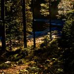 Herbst am Huzenbacher See thumbnail