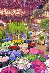 Flower Market (jpellgen (@1179_jp)) Tags: flowermarket tulipmarket market flower flowers tulip tulips ams amsterdam netherlands holland nikon sigma 1770mm d7200 summer august 2018 europe european travel bloemenmarkt